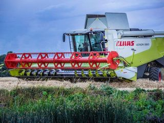 Wheat harvest with Claas Lexion
